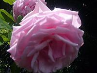 5月〜薔薇によせて〜_d0337937_07491637.jpg