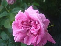 5月〜薔薇によせて〜_d0337937_07491643.jpg