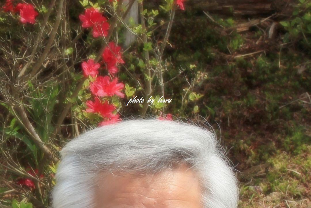 年老いて・・・綿毛_f0297537_07260195.jpg