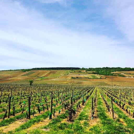Les vignes de Vosne-Romanée「ボーヌ・ロマネにて」_c0181241_6591981.jpg