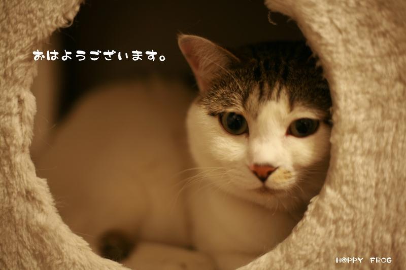 f0032042_6315511.jpg