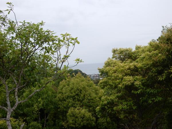 '16,5,10(火)山が緑色に燃えている~!_f0060461_1145484.jpg