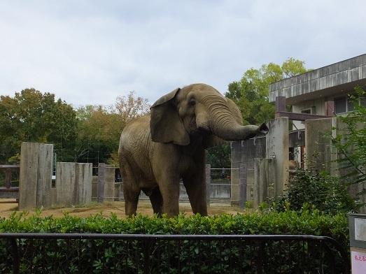 命を伝える動物園_e0272869_00382709.jpg