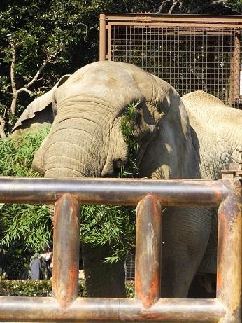 命を伝える動物園_e0272869_12281507.jpg