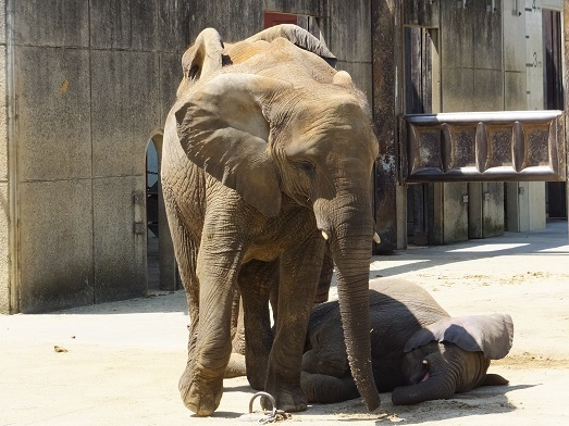 命を伝える動物園_e0272869_12473663.jpg