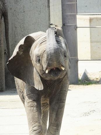 命を伝える動物園_e0272869_12513797.jpg