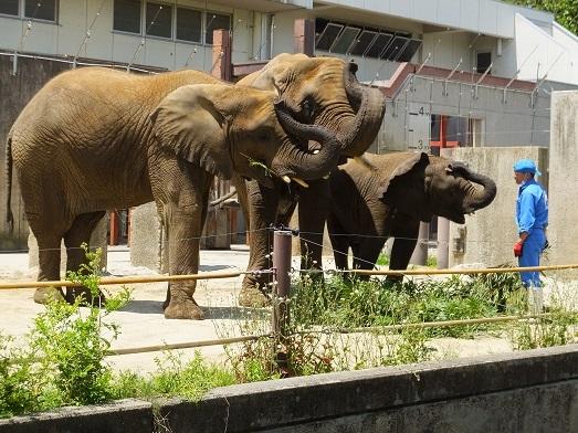 命を伝える動物園_e0272869_13452544.jpg