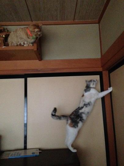 雨の日の猫は_e0355177_17051347.jpg
