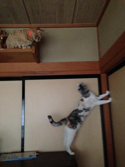 雨の日の猫は_e0355177_17052981.jpg