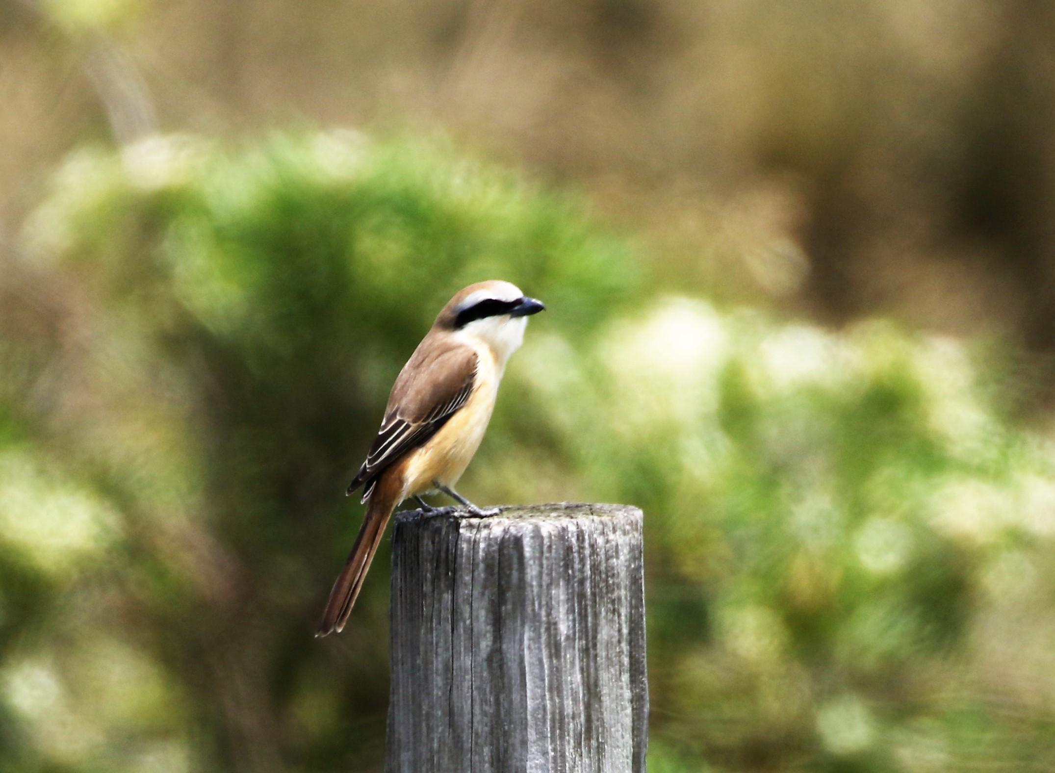 見島で出会った可愛い小鳥ちゃん_e0018678_12535856.jpg