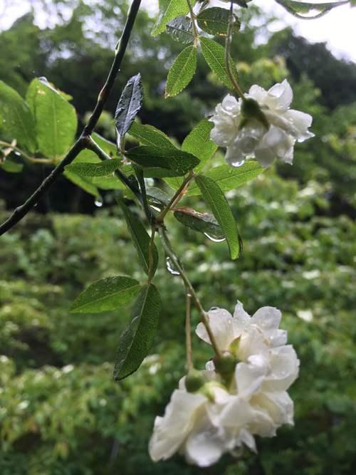 5月10日の庭_d0087595_13352684.jpg