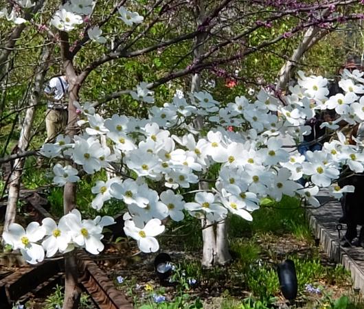 空中公園ハイラインの春のお花いろいろ_b0007805_1335726.jpg