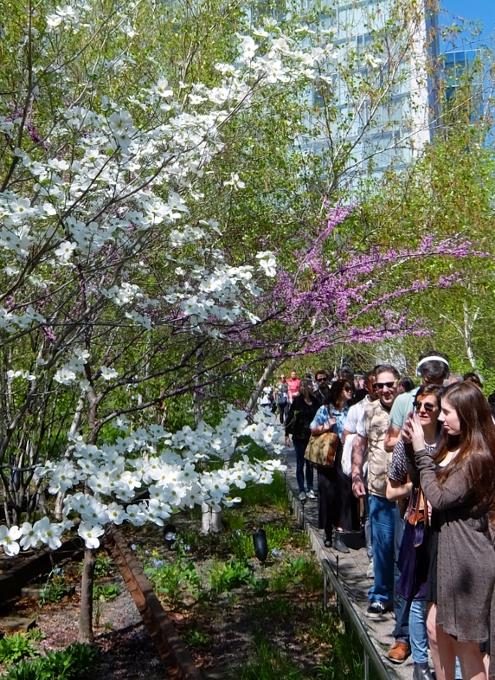 空中公園ハイラインの春のお花いろいろ_b0007805_751839.jpg