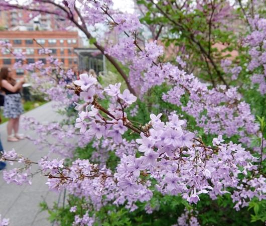 空中公園ハイラインの春のお花いろいろ_b0007805_762651.jpg