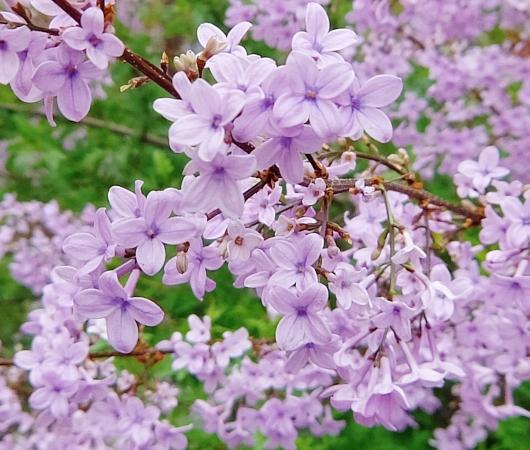 空中公園ハイラインの春のお花いろいろ_b0007805_763874.jpg
