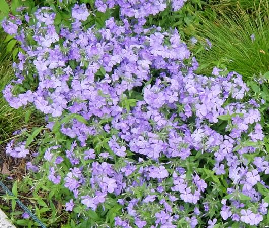 空中公園ハイラインの春のお花いろいろ_b0007805_785211.jpg