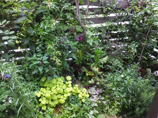 3年間の庭の記録_f0035506_19105391.jpg