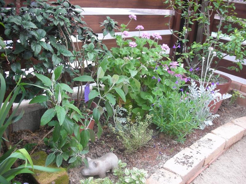 3年間の庭の記録_f0035506_1961074.jpg