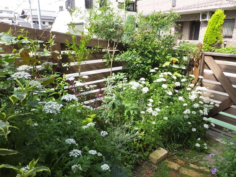 3年間の庭の記録_f0035506_1995334.jpg