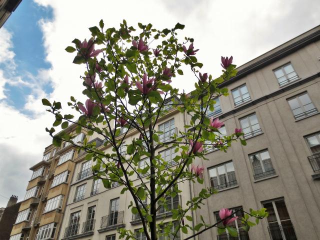 ブリュッセルへ22 近郊の町、Tongeren3_b0064411_07230880.jpg