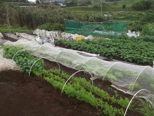 初夏ですが..秋野菜の植え付け!_b0137932_14241215.jpg