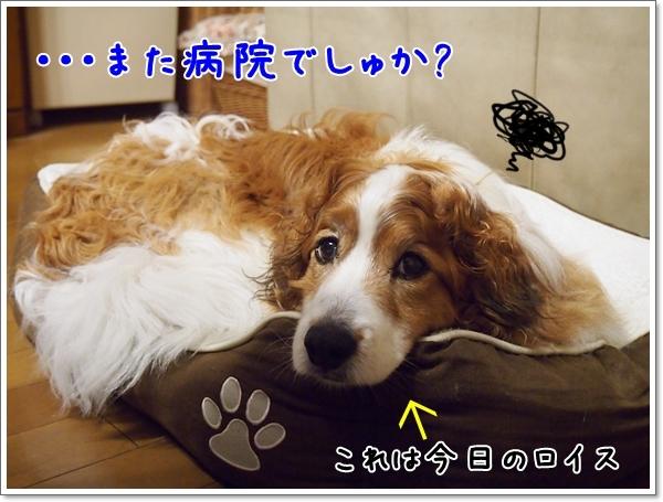 d0013149_00231247.jpg