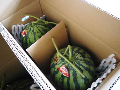 大玉スイカ『祭りばやし』 今年も「岡山農園」さんの『祭りばやし』をネット独占販売します!_a0254656_16593248.jpg