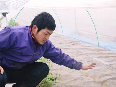 大玉スイカ『祭りばやし』 今年も「岡山農園」さんの『祭りばやし』をネット独占販売します!_a0254656_18353816.jpg