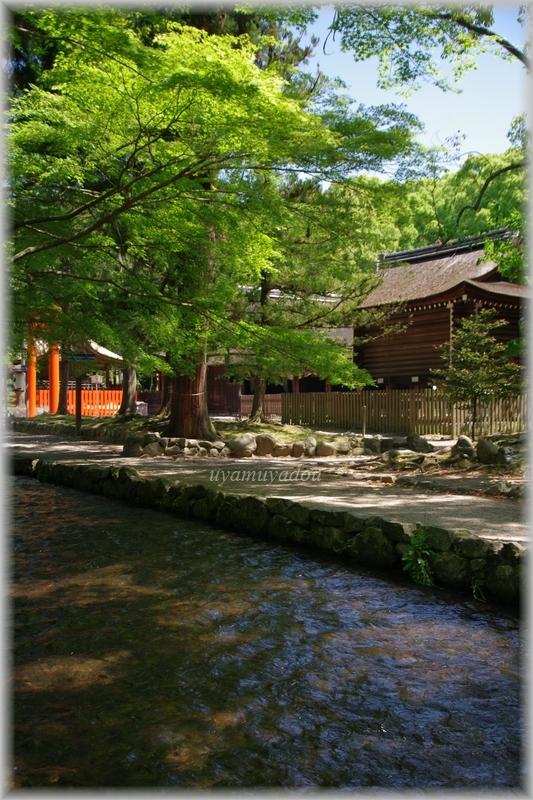 上賀茂神社・お散歩_a0157263_22535783.jpg
