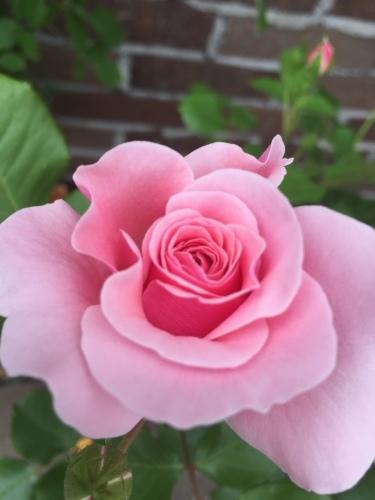薔薇の香りは、どんな音?_b0226863_23262822.jpeg