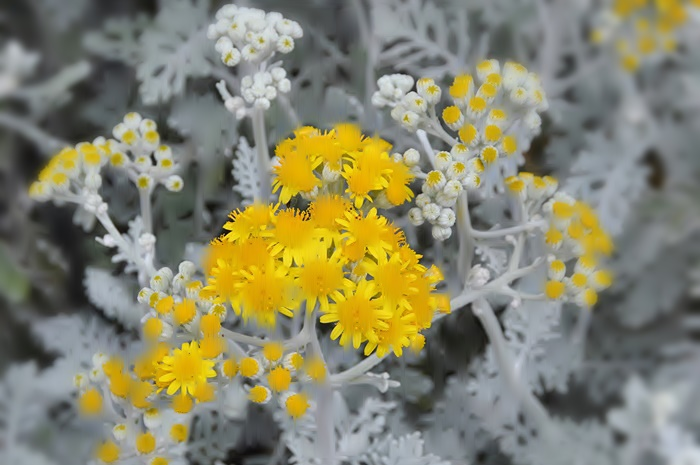 Flowers_a0126969_6241312.jpg