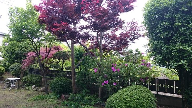 庭の木々_c0066693_841324.jpg