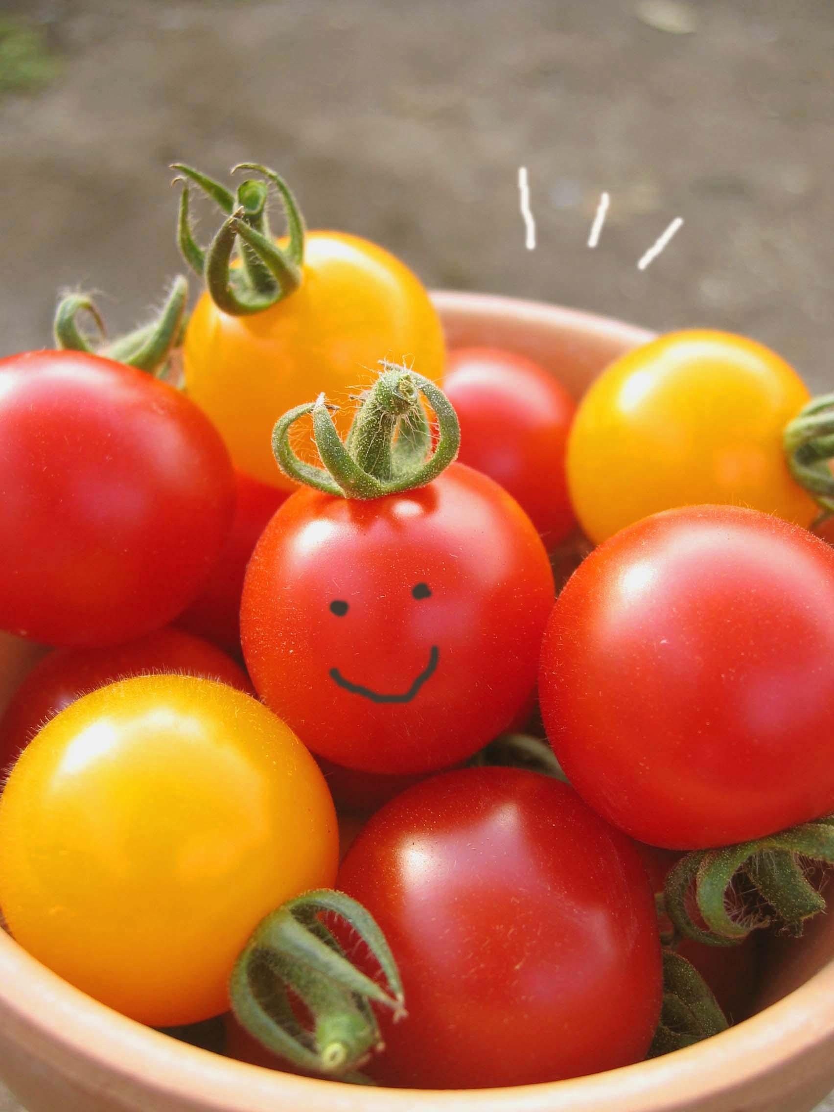 野菜苗の販売予定_a0292194_2355873.jpg
