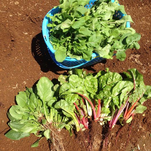 たまにお野菜販売します。_f0301305_13025226.jpg