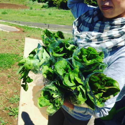 たまにお野菜販売します。_f0301305_13025261.jpg