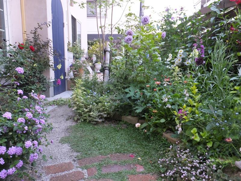 3年間の庭の記録2_f0035506_00109.jpg