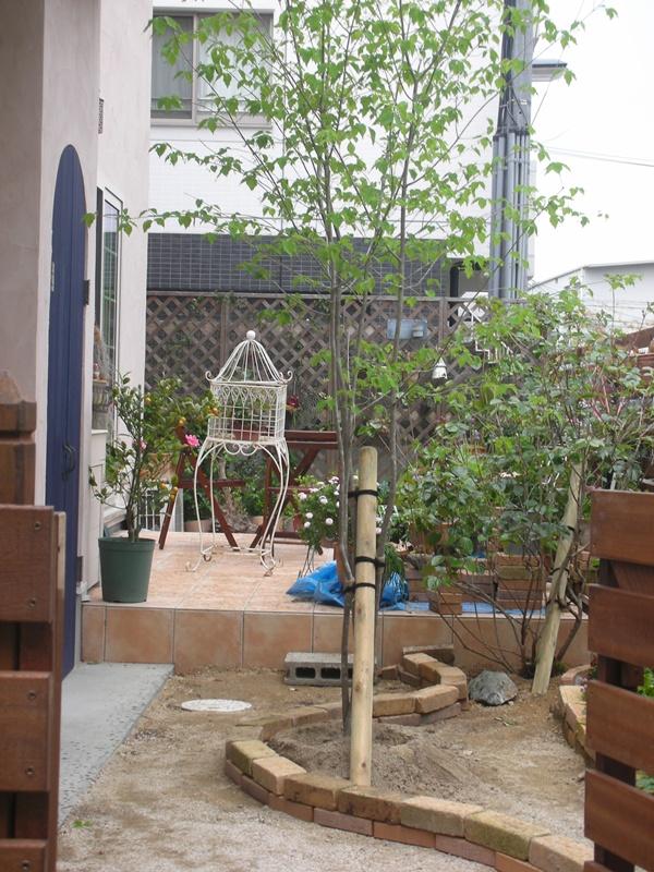 3年間の庭の記録2_f0035506_2344411.jpg