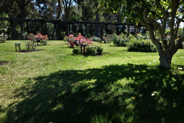 バラ公園で_b0064411_00044615.jpg
