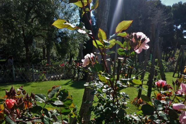 バラ公園で_b0064411_00065716.jpg