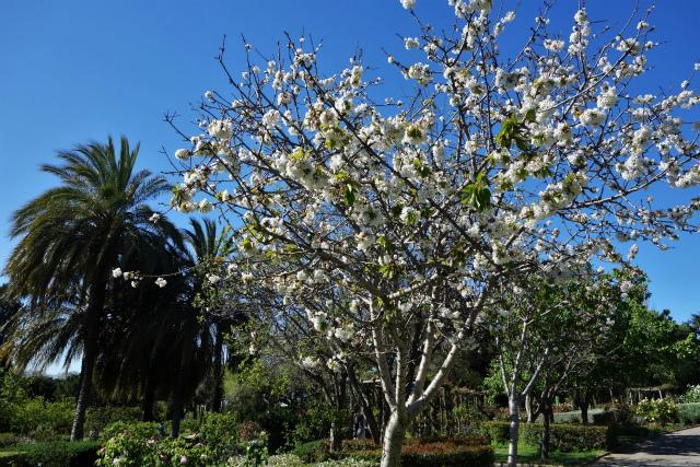 バラ公園で_b0064411_00065777.jpg