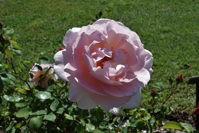 バラ公園で_b0064411_00065797.jpg