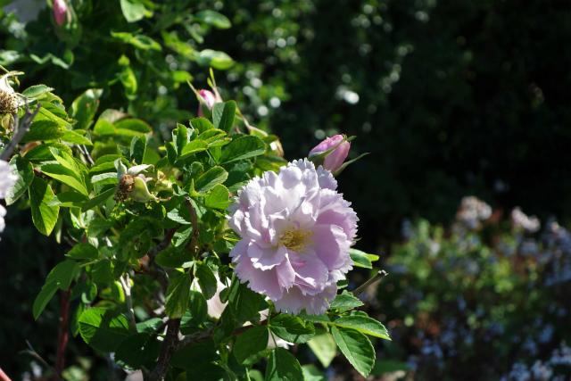 バラ公園で_b0064411_00084329.jpg
