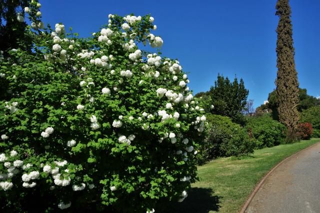 バラ公園で_b0064411_00084450.jpg