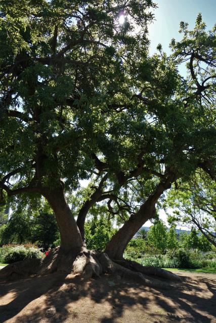バラ公園で_b0064411_00104141.jpg