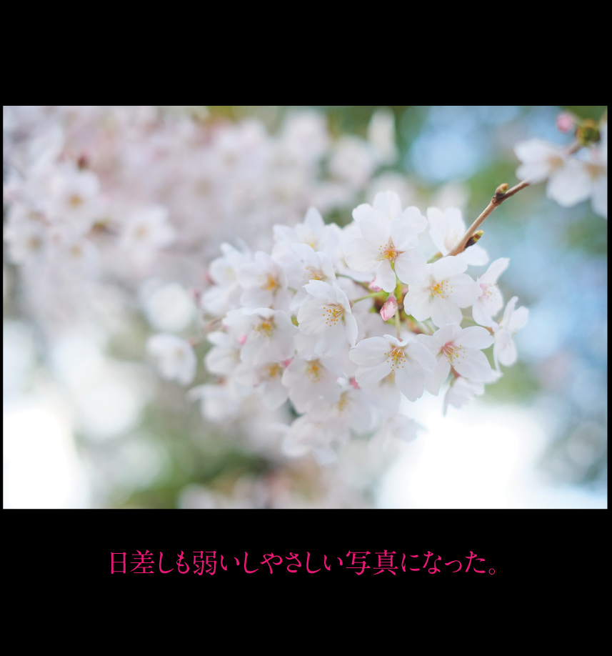 a0358016_10051787.jpg