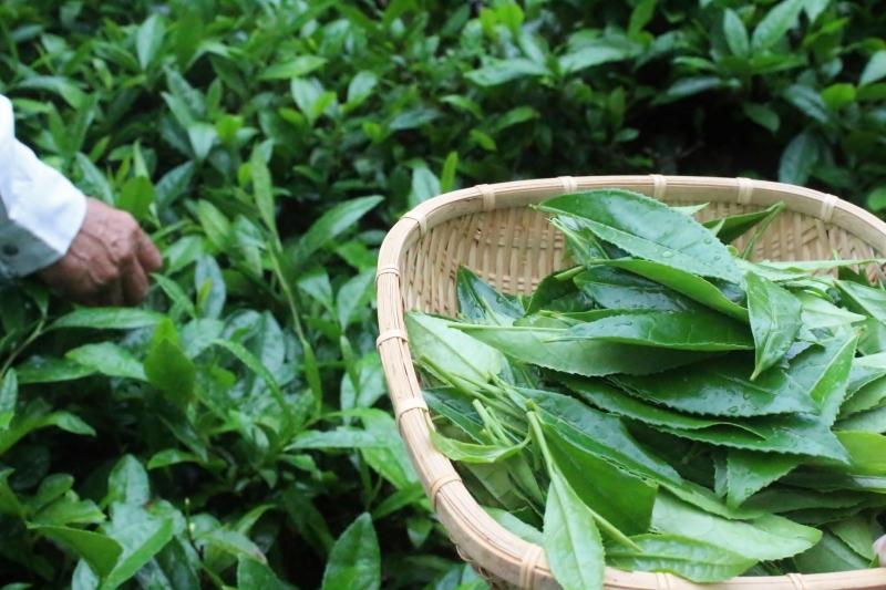 茶LON (32)_b0220318_22120356.jpg