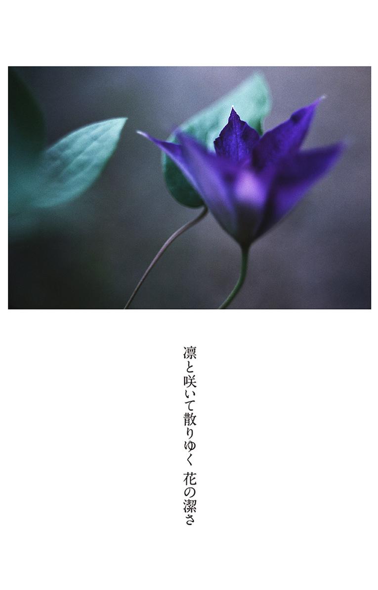 今の花_b0355531_12185765.jpg