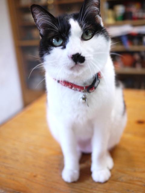 猫のお留守番 ハナちゃんホビちゃんエムくんライオンちゃんガブくんハートくん編。_a0143140_2120021.jpg