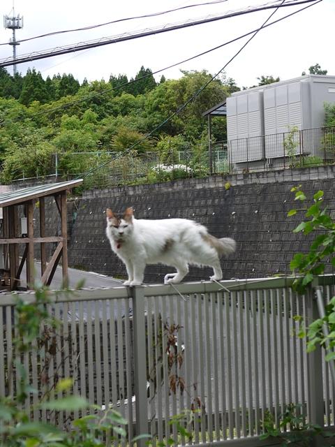 猫のお留守番 ハナちゃんホビちゃんエムくんライオンちゃんガブくんハートくん編。_a0143140_21204467.jpg