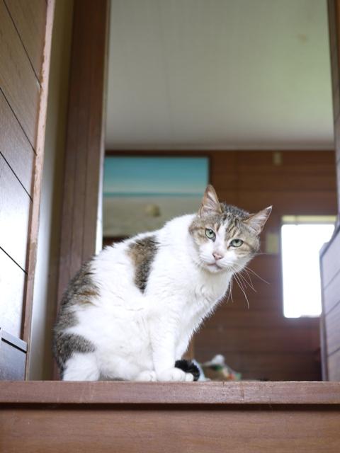 猫のお留守番 ハナちゃんホビちゃんエムくんライオンちゃんガブくんハートくん編。_a0143140_21212538.jpg